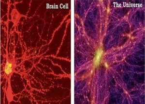 brain cell - universe