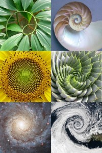 Sacred-Geometry-Golden-Ratio-Spiral-of-Life-Nature-Fibonacci-Sunflower